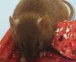 Souris - C'est quoi un souris?